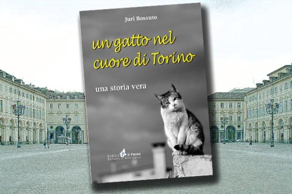 gatto_immagine_apertura_930593951