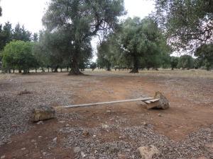 Salento. Una panchina tra gli ulivi, per una buona lettura. Foto, Romano Borrelli