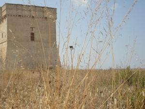 Torre Chianca, Porto Cesareo. 25 agosto 2014. Foto, Romano Borrelli (2)