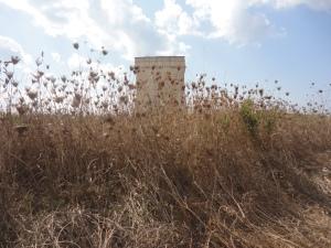 Torre Chianca-Porto Cesareo. 25 agosto 2014. Foto, Romano Borrelli
