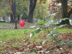 Torino, 14 novembre 2014. Giardini. Foto, Romano Borrelli