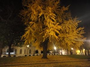 Torino 22 novembre 2014. La bellezza della natura. Giardini nel centro di Torino. Foto, Romano Borrelli
