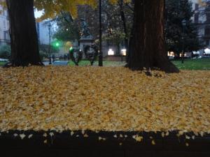 Torino,  1 dicembre 2014, via Pietro Micca, giardini. Foto Borrelli Romano