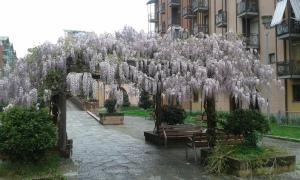 Torino vs Parco Dora.foto Borrelli Romano