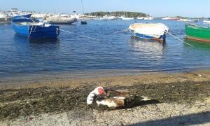 20 8 2015 Porto Cesareo.Le.foto Borrelli Romano