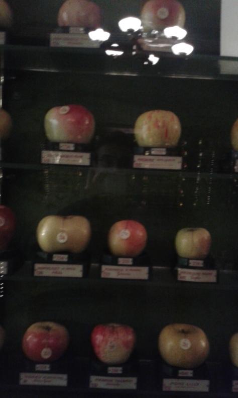Torino 2 2 2016.museo della frutta.Borrelli.Romano